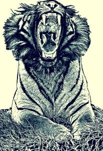 sumatran tiger - BMFTL